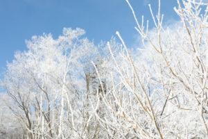 川湯温泉街の「霧氷」