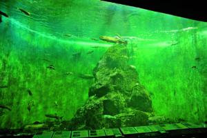 標津サーモン科学館(サケの水族館)