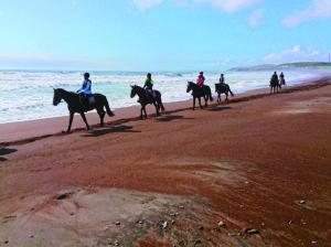 北太平洋シーサイドライン乗馬クラブ
